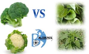 broccoli vs callaloo_v1