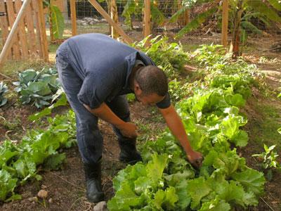 lettuce-farmer